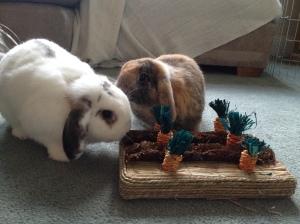 Carrot Patch Cuties
